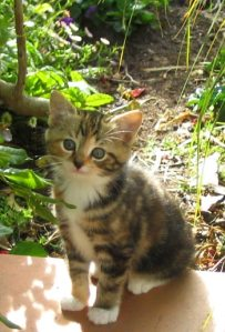 4980f-kitten-tabby
